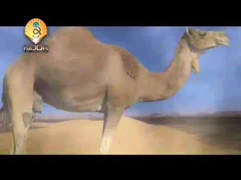 (Zakat) Taxable limit of Camel